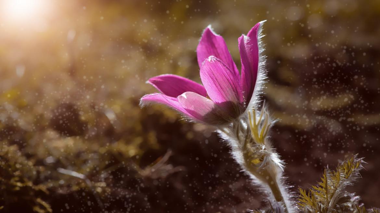 Piante e fiori autunnali per aiuole sempre curate