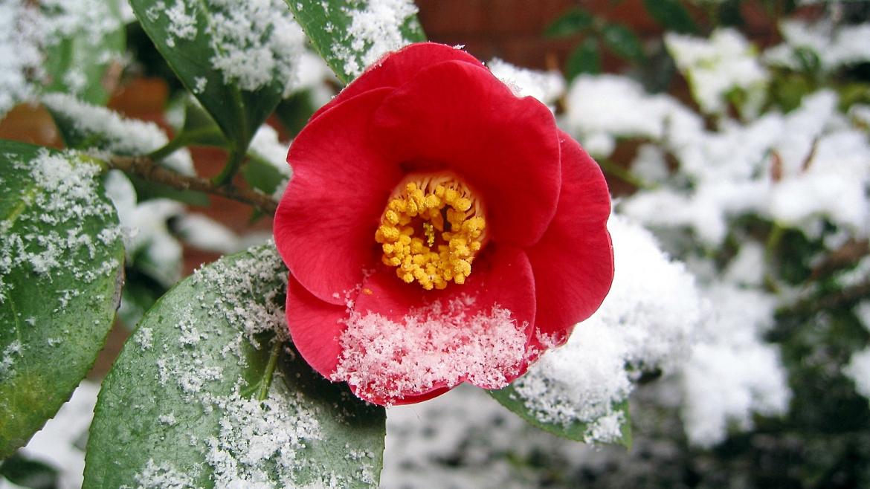 Cura il tuo giardino anche in inverno!
