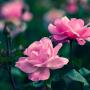 Giardino fiorito in primavera, quali piante scegliere?