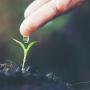 Preparare il terreno per la semina del prato: consigli e suggerimenti