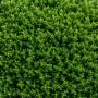 Potatura arbusti ornamentali: quando farla e come