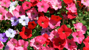 Estate: le piante più belle per il tuo giardino